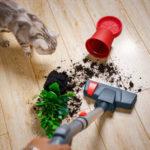 Best Vacuum Cleaners For Laminate Floors